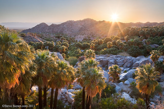 First light in the canyon oasis, Baja California, Mexico